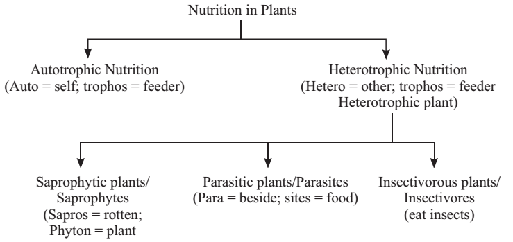 Mode Of Nutrition In Plants