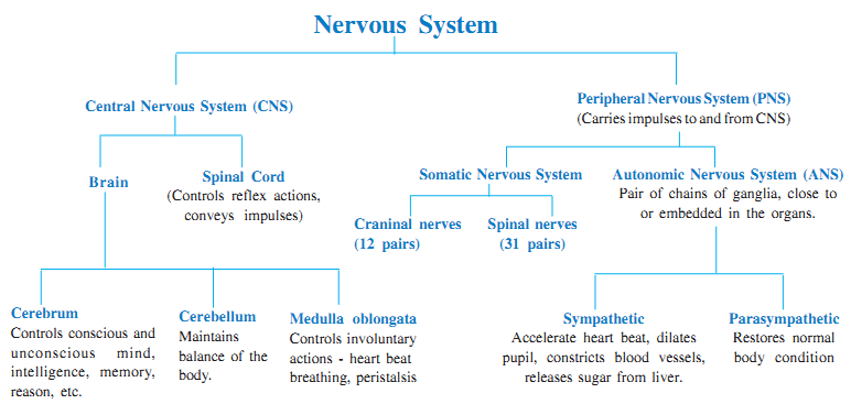 nervous system  control and coordination